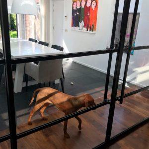 Stalen deuren en huisdieren